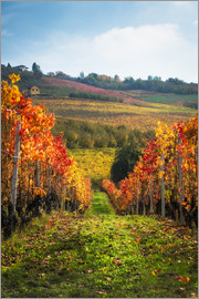 Salvadori Chiara - Langhe in Autumn, Italy