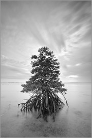 Long exposure of mangrove tree
