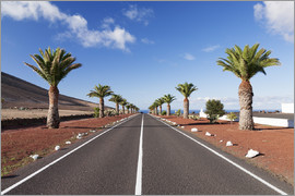 Markus Lange - Lanzarote, Street with Palm Trees