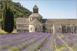 Francesco Vaninetti - Lavender crop in front of Senanque Abbey