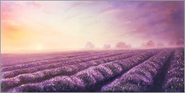 Lavender dream