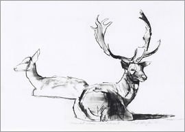 Mark Adlington - Lying deer couple