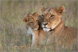 Ian Cuming - Lioness with cub
