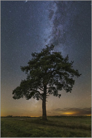 Yuri Zvezdny - Lonely tree in a field at night under the Milky Way in Vyazma, Russia.