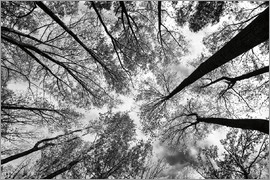 Aledanda - Looking Up I BW