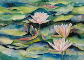 Jitka Krause - Lotus flowers