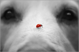 Gabi Stickler - Ladybug on Dog Nose