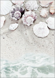 Sea Beach with Shells