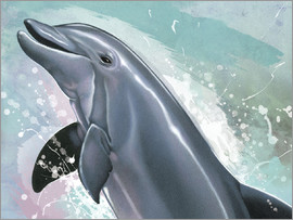 Ashley Verkamp - Bottlenose Dolphin
