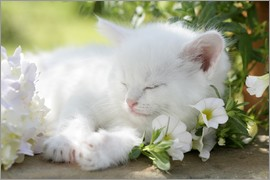 Greg Cuddiford - Kitten asleep in bushes
