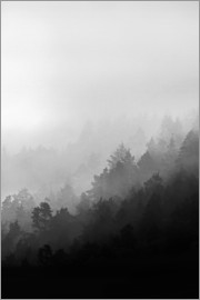 Mareike Böhmer Photography - Misty Mornings