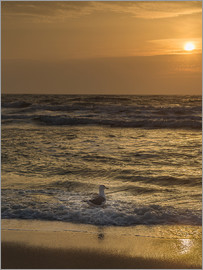 Heiko Mundel - Seagull in the sunset
