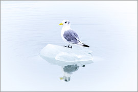 Thomas Hagenau - Seegull Piece of Glacier