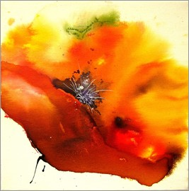 Brigitte Dürr - Poppy - single flower