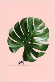 Jonas Loose - MONSTERA ANT