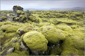Lee Frost - Lava field covered in green moss