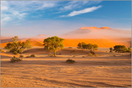 Fabio Lamanna - Morning mist over sand dunes and Acacia trees at Sossusvlei, Namibia