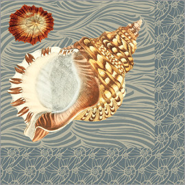 Gail Fraser - Shell of a sea snail
