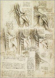 Leonardo da Vinci - Muscles of the Spine