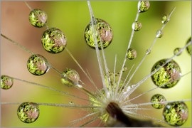 Christopher Talbot Frank - Close-up of water droplets on a dandelion with reflections