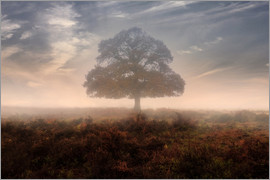 Joana Kruse - New Forest