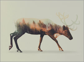 Andreas Lie - Norwegian Woods Reindeer
