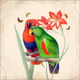 Mandy Reinmuth - Oh My Parrot I