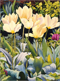 Christopher Ryland - Pale Tulips
