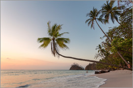 Matteo Colombo - Palm tree and exotic sandy beach at sunset, Costa Rica
