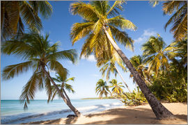 Matteo Colombo - Palm trees and sandy beach in the caribbean, Martinique, France