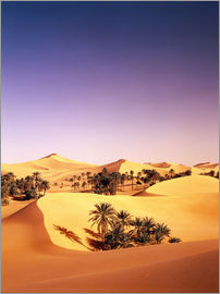 Thonig - Palm grove in Algeria, Sahara