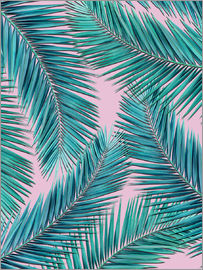 Mark Ashkenazi - palm tree