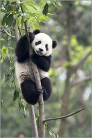 Tony Camacho - Panda on a tree