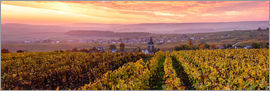 Matteo Colombo - Panoramic of autumn vineyards near Ville Dommange in Champagne, France