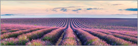 Matteo Colombo - Panoramic of lavender field in Provence, France
