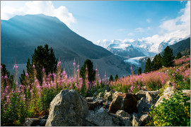 Peter Wey - Panoramic view of Morteratsch valley with Piz Palu peak in the background Pontresina, Endg