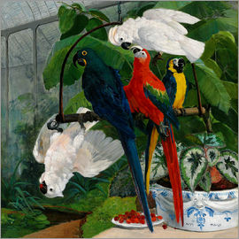 Filippo Palizzi - Parrots in a greenhouse.