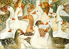 Ditz - Patchwork Geese