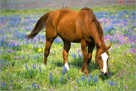Darrell Gulin - Horse on a meadow with wildflowers