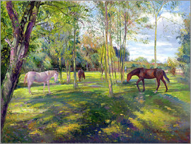 Timothy Easton - Horse paddock