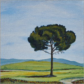 Christine Huwer - Pine close to La Vitaleta San Quirico Val dOrcia Tuscany