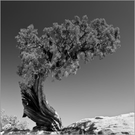 Denis Feiner - Pine tree B&W