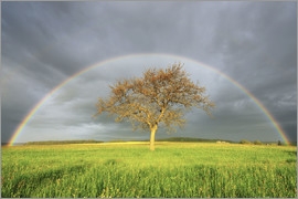 Radius Images - Plane Tree in Meadow with Rainbow in Spring, Bad Mergentheim, Baden-Wurttemberg, Germany