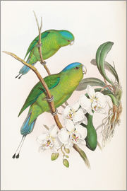 John Gould - Philippine Racket tailed Parrot