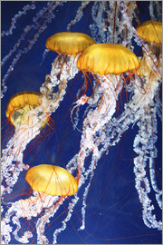 jellyfish Parade