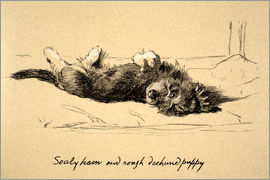 Cecil Charles Windsor Aldin - Rough Dachshund Puppy