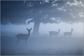 Alex Saberi - Deer in mist