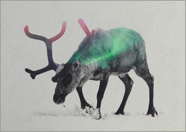 Andreas Lie - reindeer in the aurora borealis