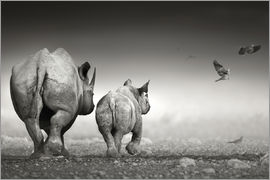 Johan Swanepoel - Rhinoceros cow and calf walking away together