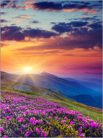 Rhododendron blossom in the Carpathians